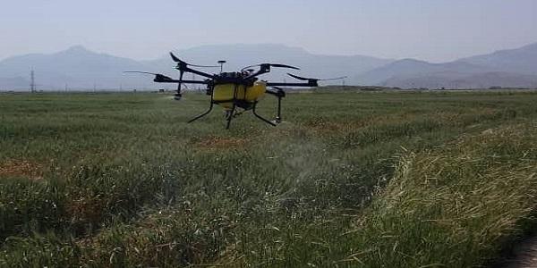 سمپاشی علیه سنک کلزا و سن گندم در سطح ۵۰ هکتار از اراضی زراعی هرسین با استفاده از پهباد
