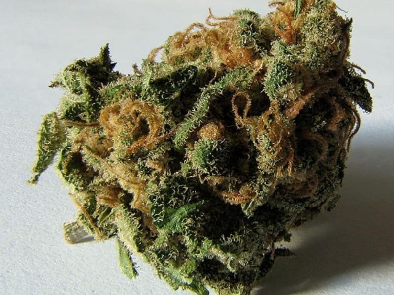 کشف ۴ کیلو گرم ماده مخدر گل در هرسین